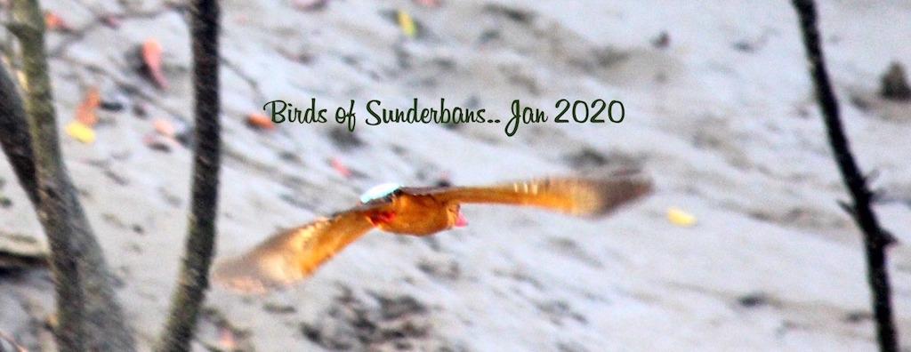 Birds of Sundarbans
