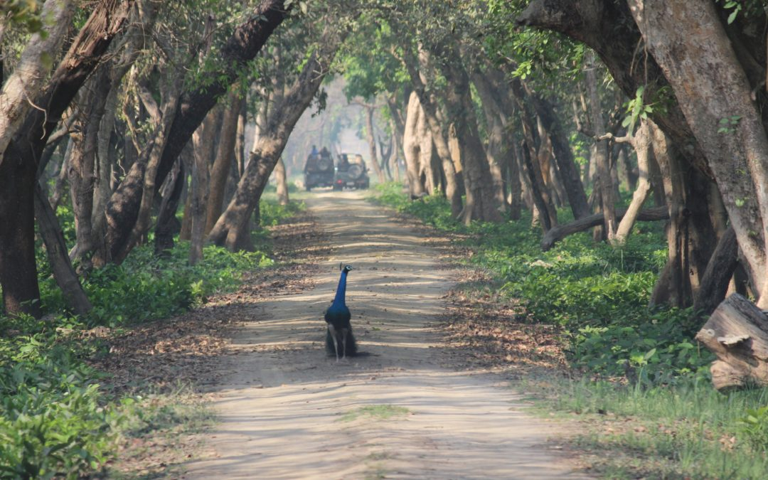 Into the jungles- Dudhwa National Park, UP